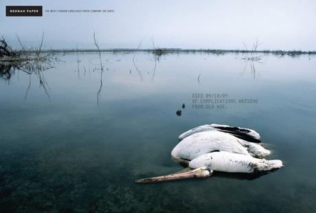 Grafous :: Diseño Gráfico Social, Actrivista y Sostenible :: Neenah papel ecológico